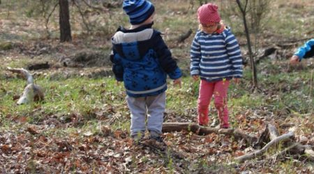 Unsere Wald-Expedition